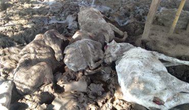जालौन:योगी सरकार में गायों की भूख के मारे हो रही तड़प तड़प कर मौत। Soni News